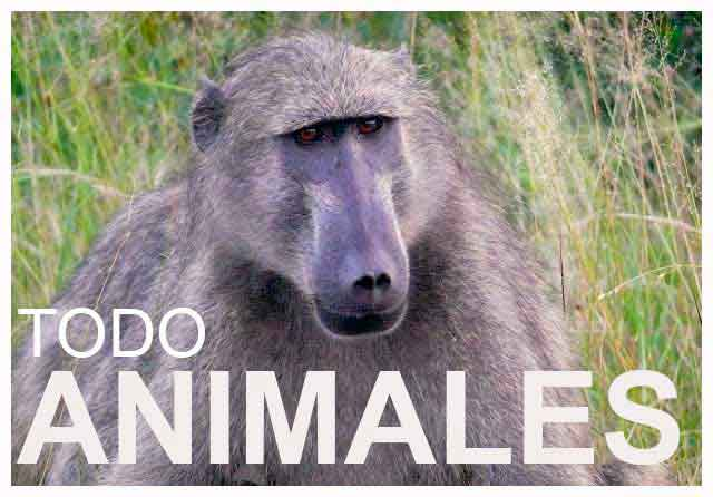 animales-chica